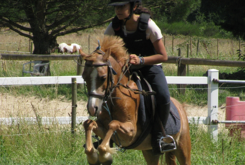 poney 2 quel galop