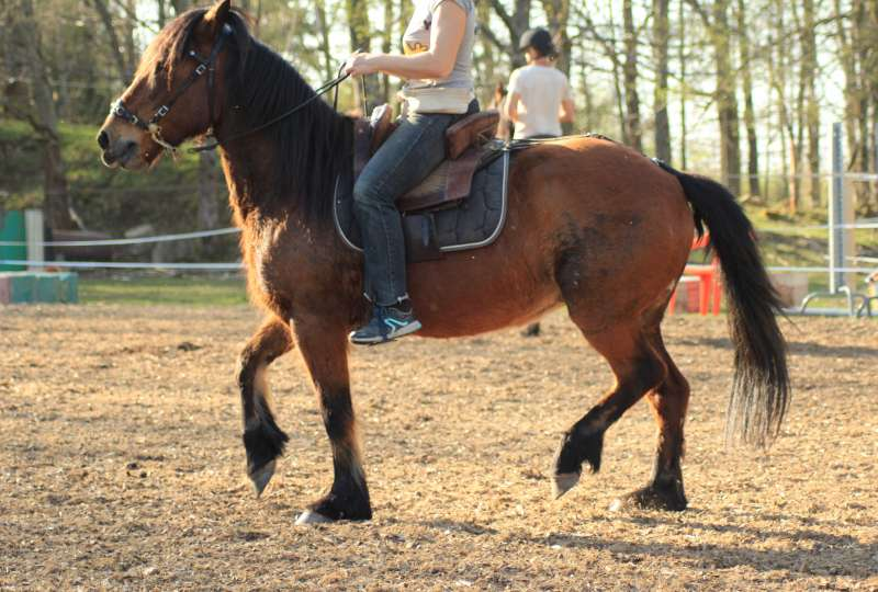 STAGE EQUITATION SANS MORS